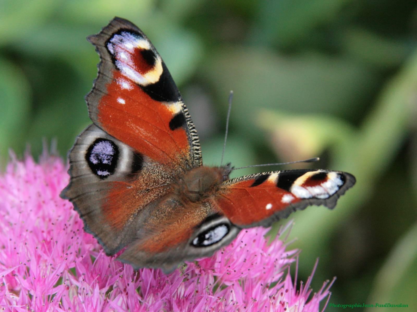 Papillons - Images de papillon ...